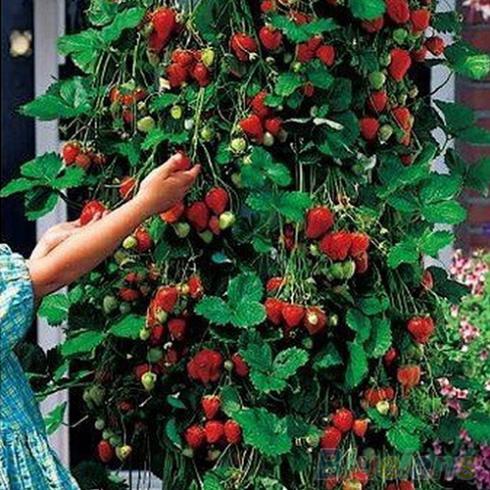 Карликовое дерево Oem 50 2CUD 10242 карликовое дерево oem 12 220