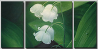 Free Shipping hand-painted White flowers clouds High Q. Wall Decor Modern Abstract Oil Painting on canvas 3pcs/set  DM-15010341
