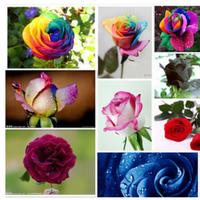 100 pcs Seeds Rare Holland Rainbow Rose,Flower Home Garden rare rainbow rose flower seeds Free shipping