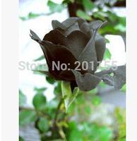 100 pcs China Rare Black Rose Flower free shipping
