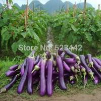 Free Shipping 1 Packs 200 Seeds Purple Eggplant Seeds