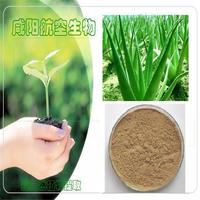 200g[Hot sell]  Aloe Vera Extract Powder 10:1