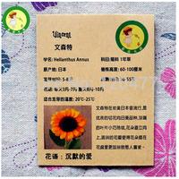 Vincent sunflower seeds - 5 seeds/bag