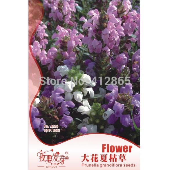 25 particles/bag Perennial Prunella grandiflora Seeds, Novel Plant Perennial Flower seeds low temperature resistance(China (Mainland))