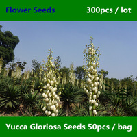 Flowering Plant Yucca Gloriosa Seeds 300pcs, Evergreen Shrub Family Asparagaceae Flower Seeds, Beautifying Spanish Dagger Seeds