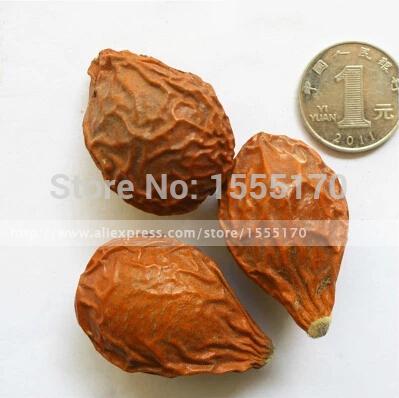 bonsai cycas, trees bonsai cycad, cycads seeds, 100% real seeds 1 PCS/BAG(China (Mainland))