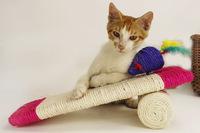 Pet products vinyl toys colorful cute cat pillow dog toys for dog cat puppy and toys for dog, cama elastica