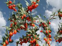 Organic Dried Goji Berries 500g Medlar 2 Bags*250g Goji Berry Chinese Ningxia Medlar Herbal Tea Personal Care Suplementos Food