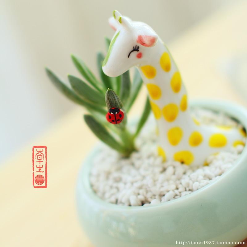 Flower Pot Decoration Designs Decoration Meat Flower Pot