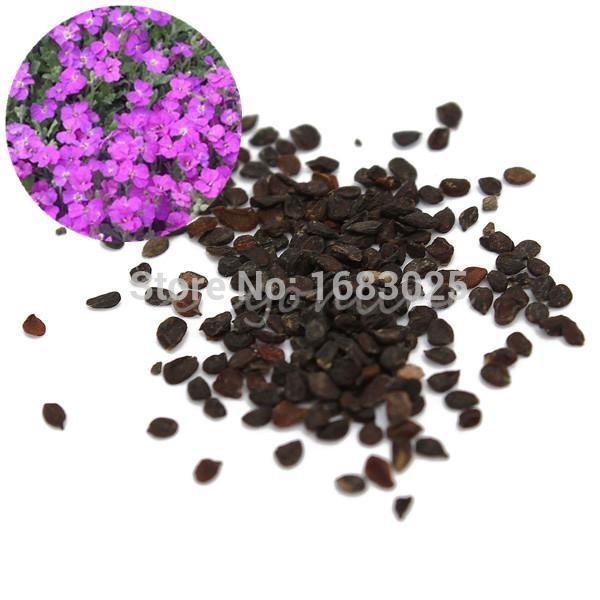 ROCK CRESS 50Pcs/Bag Seeds GROUND COVER Rockery Flower Garden Aubrieta Creeping Violet Queen Seed(China (Mainland))