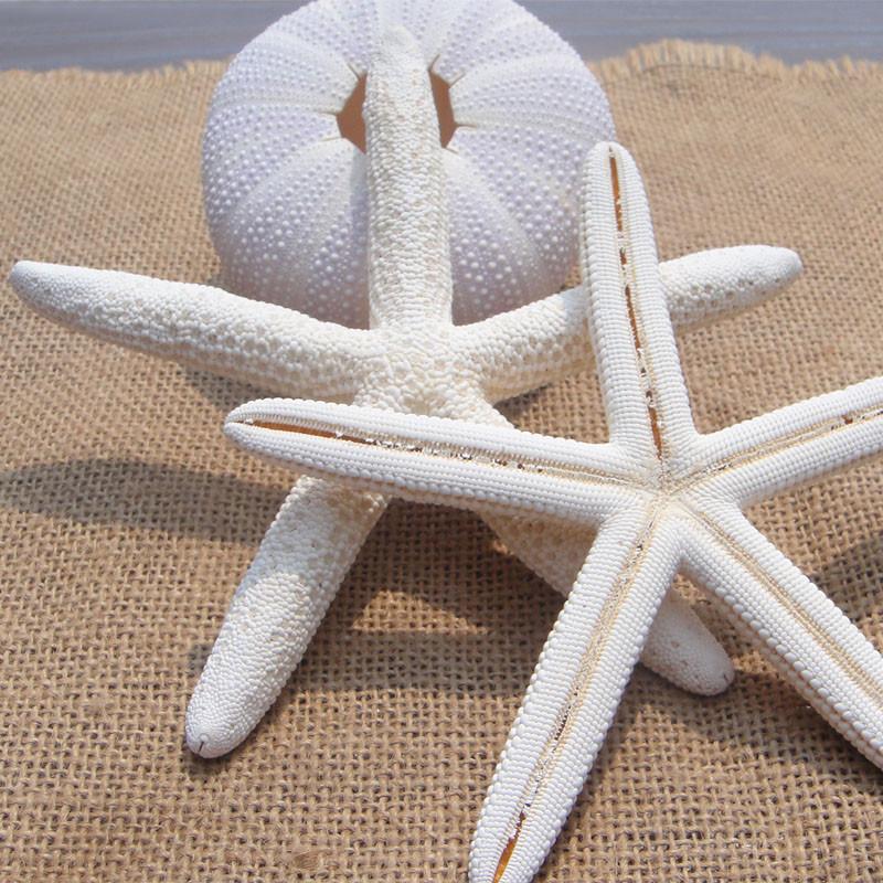 10Pcs/Lot STARFISH STAR SEA SHELL WEDDING BEACH DECOR decorative shells sea shells naturalcrafts materials wall sticker10-12cm(China (Mainland))