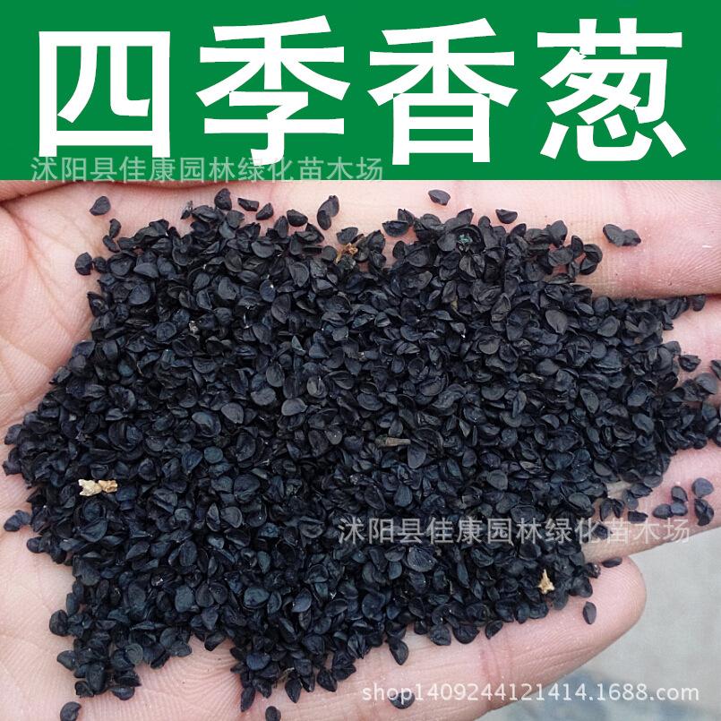 quality Seasons Seasons shallot seeds onion seeds small shallot seeds chives shallot 200g / Pack Vegetable Seeds(China (Mainland))