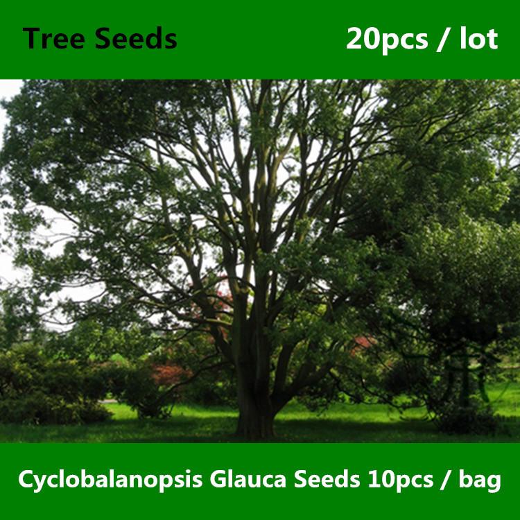 What Plants Grow Under Live Oak Trees : Plants under oak trees images