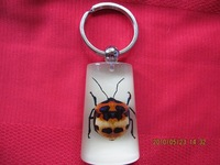 promotion luminous keychain with variety insect in amber dropshiping 20pcs/lot
