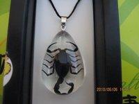 child's jewelry novelty pendant necklace real scorpion amber pendant