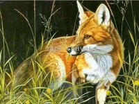 from artist YP435 FREE shipping New HIGH QUALITY CANVAS OIL PAINTING wildlife animal FOX