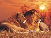 Good Quality 30*40cm Sunset Lions HD PET Lenticular 3D Picture,  3D lenticular home decoration pictures, Free Shipping