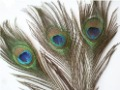 Freel shipping Wholesale 100pcs/lot Natural Peacock Feathers Eyes , about 30cm