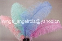 "wholesale 100pcs/lot 24-26"" Ostrich Feather Plume FREE SHIPPING"