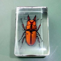 Natural Insect Specimen Real Insect Amber Lucite Sample Stag Beetle 45mm*30mm*17mm High Quality The Best Collection