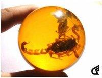 Rare Baltic sub- amber Scorpion fossil ball Free shipping  S-012