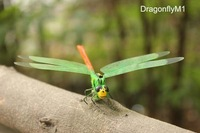 "Lovely Home Decoration 4"" Dragonfly Magnetic Memo Sticker Christmas Gifts 120pcs Mixed Lot Free Shipping"