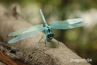 Wholesale Handicrafted ECO Mini Blue Dragonfly Magnetic Sticker 5X6CM Home Decor 120pcs Mixed Lot Free Shipping