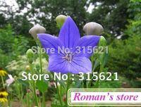 Flower seeds balloonflower hexagonal lotus flower For Family Balcony 5bag/lot  Free Shipping