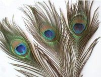 Top quality peacock feather,100pcs/lot, length:25-30 cm,beautiful natural peacock feather