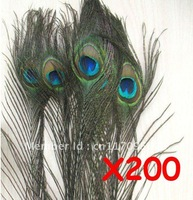 "Wholesale - Peacock Tail Feathers 200pcs 8""-12"""