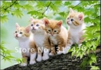 Good Quality 25*35cm HD PET Lenticular 3D Picture, 3D lenticular home decoration pictures,Without frame Free Shipping-cat