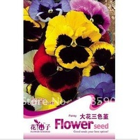 Pansy flower Seeds for garden 50 pcs of Seeds per Bag 5 bags per lot