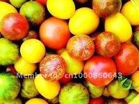 10pcs/bag colourful tomato vegetable Seeds DIY Home Garden