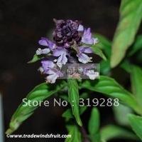 10pcs/bag Cinnamon basil Seeds DIY Home Garden