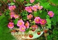 "10pcs/bag pink flower Strawberry ""pink panda""Seeds DIY Home Garden"