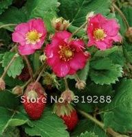 10pcs/bag red flower Strawberry Seeds DIY Home Garden