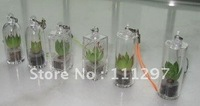 free shipping hot sell alive mini plant mini key chain mini flower many kinds 200 pcs