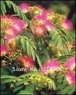 5pcs/bag Acacia tree Seeds DIY Home Garden