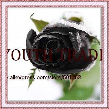 black rose Seeds 50pcs/lot, free shipping