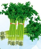 50pcs/bag Celery  vegetable Seeds DIY Home Garden