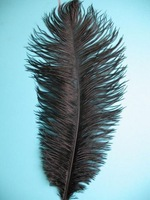 free shipping ostrich feather ,12-14inch (30-35cm) 50piece/lot ( black )