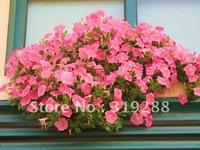 5pcs/bag dark pink Petunia hybrida flowers Seeds DIY Home Garden