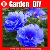 FREE SHIPPING 100 Seeds Chinese Rare Blue Peony Flower Seeds Beautiful lovely HOT PEONY 11