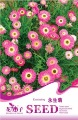 Free Shipping 3 Bags of Everlasting Flower Seeds*20 pieces of seeds per bag