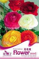 5 Packs 100 Seeds,Ranunculus Flower (Bettercups) Seeds+  Free gift ,Perfect Cutflowers Choice,A078