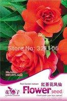 5 Packs 100 seeds / pack, Red Garden Balsam Herbs Impatiens Balsamena.L Flower Seeds #A002