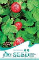 5 Pack 250Seed Indian mock strawberry fruit seed B088