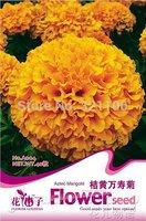 1 Packs 50 Seeds,Flower seeds Orange Aztec Marigold Tagetes Erecta Flower Seeds A004