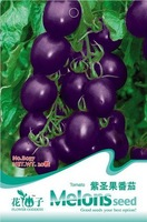 Free Shipping 3 Packs Of Purple Tomato/1 Pack  20 Seeds Vegetable Seed Healthy Green Food B037