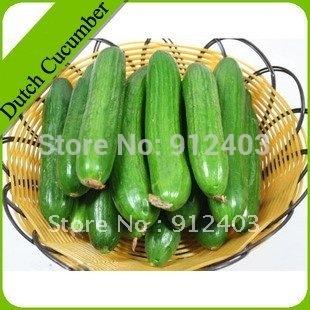 Dutch Cucumber Seeds 20pcs Free Shipping.
